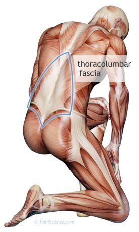 thoracolumbar-fascia-xl